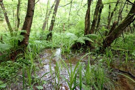 Naravni rezervat Mali Rožnik